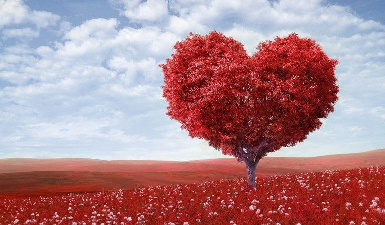 Ingin Memberikan Bunga di Hari Valentine? Ketahui Dulu Makna dan Simbolnya