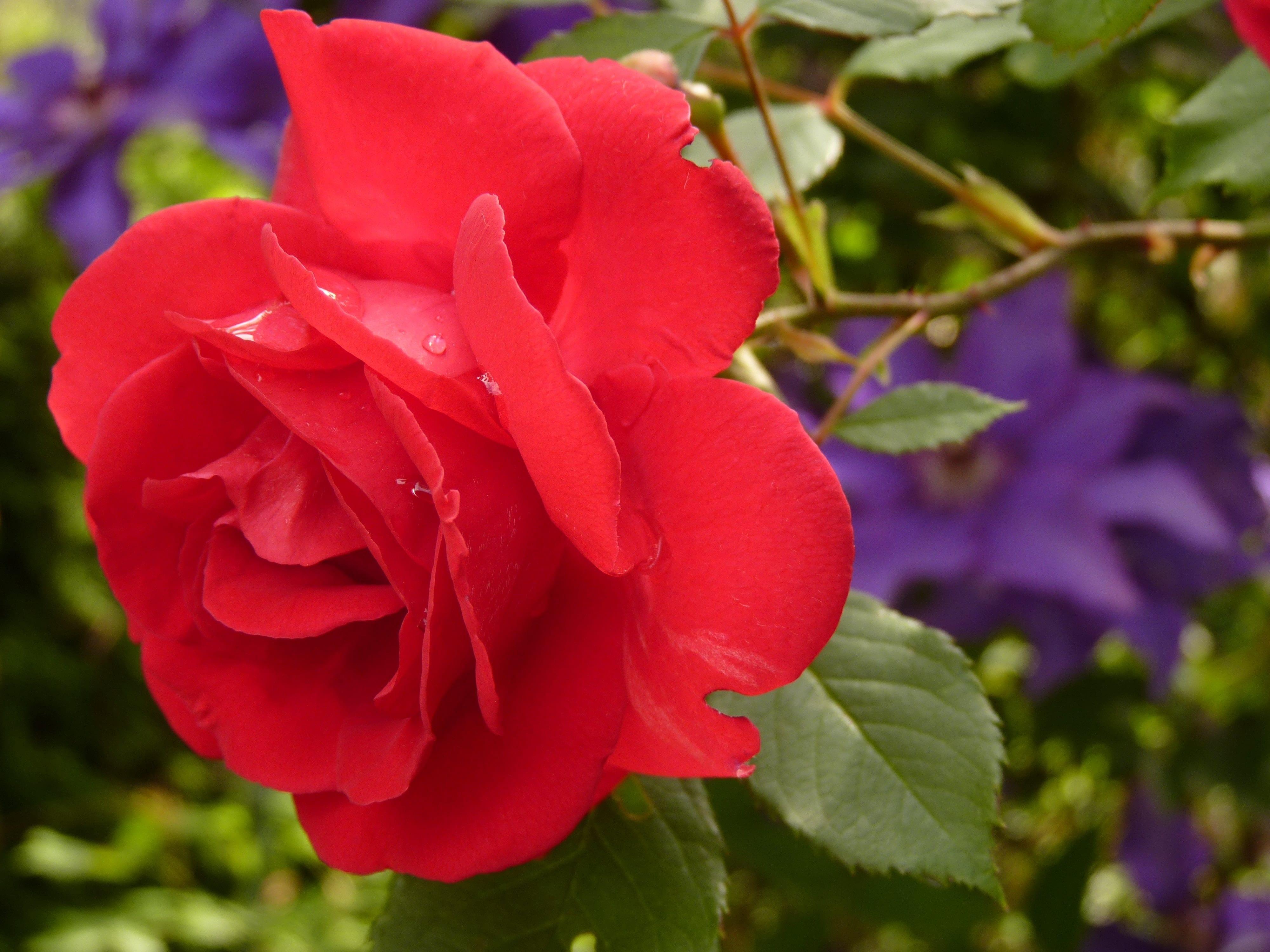 Ingin Memberikan Bunga Di Hari Valentine Ketahui Dulu Makna Dan Simbolnya Yooreka Id